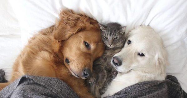 Δυο σκύλοι και μια γάτα μας μαθαίνουν τι θα πει αληθινή φιλία