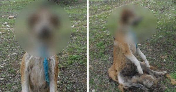 Φιλόζωοι επικηρύσσουν για 1.000 ευρώ τον εγκληματία που κρέμασε σκυλάκι από δέντρο