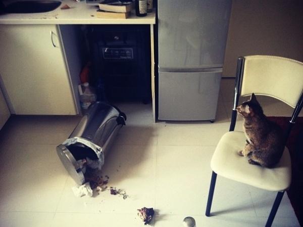 Σκύλος Γάτα
