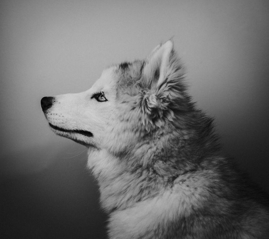 Σκύλος γράμμα