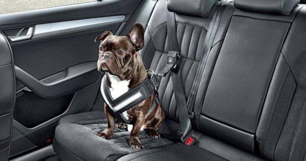 Αυτά είναι τα πιο χρήσιμα αξεσουάρ αυτοκινήτου για σκύλους! (pics)