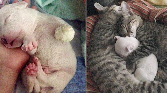 κουτάβι γάτες