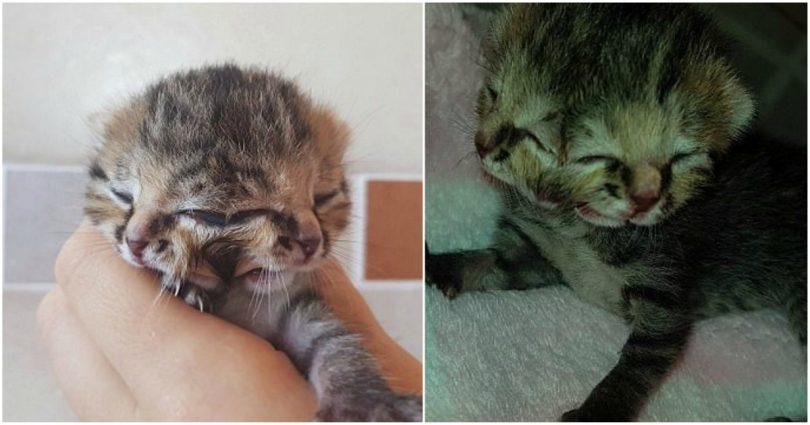γατάκι Γάτα