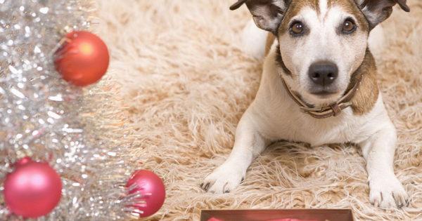 Γιατί τα σκυλιά δαγκώνουν περισσότερο στη διάρκεια των γιορτών;