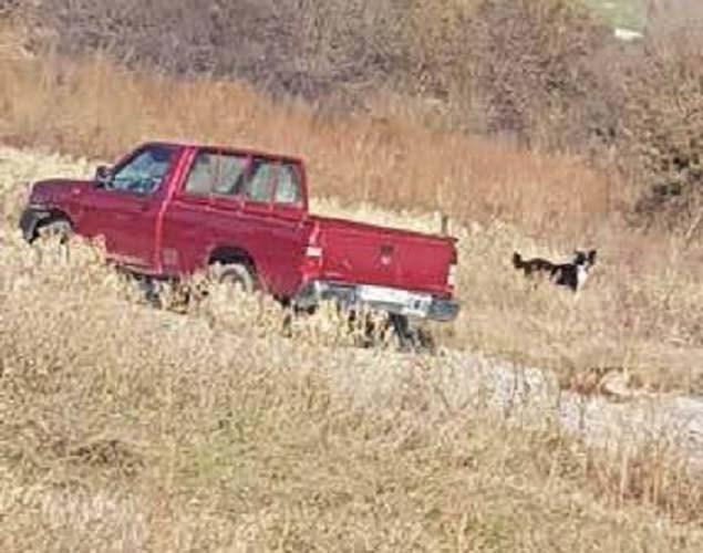 κακοποίηση σκύλου έδεσε σκύλο