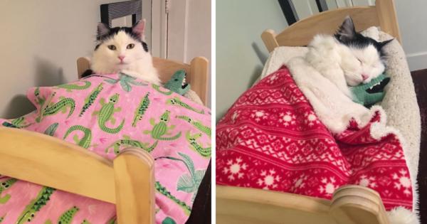Γάτα που διασώθηκε, κοιμάται κάθε βράδυ στο κουκλίστικο κρεβάτι της σαν άνθρωπος