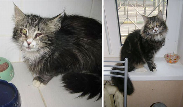 διάσωση ζώων γάτες
