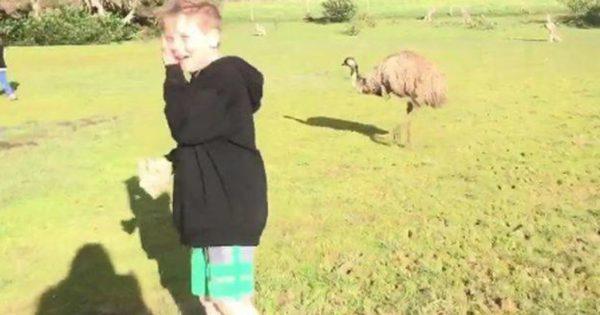 Καγκουρό «νταής» ρίχνει γροθιά σε… αγοράκι (βίντεο)