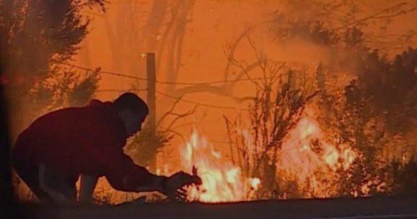 Σώζει με αυτοθυσία κουνέλι από την πυρκαγιά και γίνεται «ήρωας»!