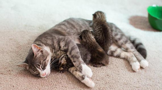 Μαμά γατούλα που έχασε τα 3 γατάκια της ενώθηκε με 3 εγκαταλειμμένα γατάκια που χρειαζόντουσαν νέα μαμά