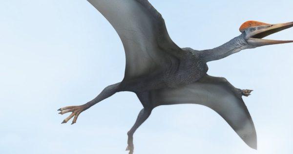 Βρέθηκαν απολιθωμένα αυγά πτερόσαυρων στην Κίνα