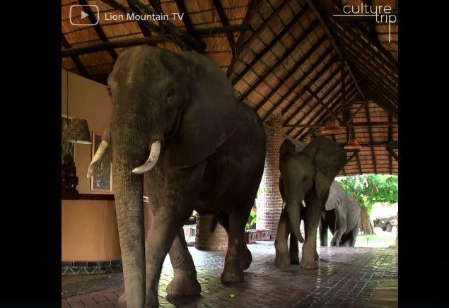 ελέφαντες Βίντεο