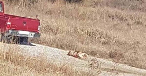 Καταδίκη 75χρονου που έσερνε σκύλο με το αγροτικό