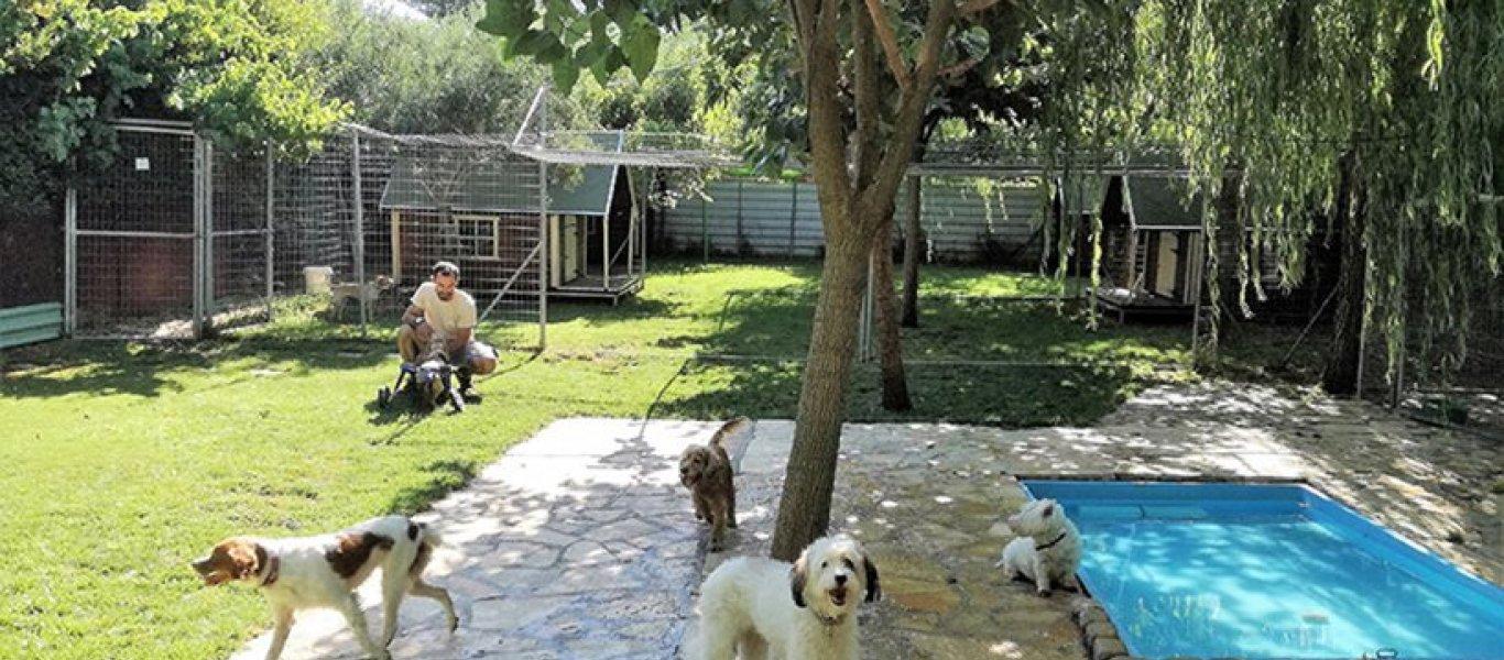 Σκύλος πανσιόν σκύλων