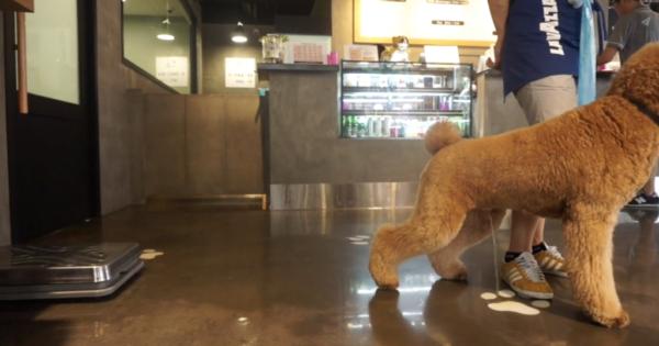 ΑΠΙΣΤΕΥΤΟ: Έγραψαν καταστηματάρχη επειδή επέτρεψε σε πελάτισσα να έχει μαζί της το σκυλάκι της