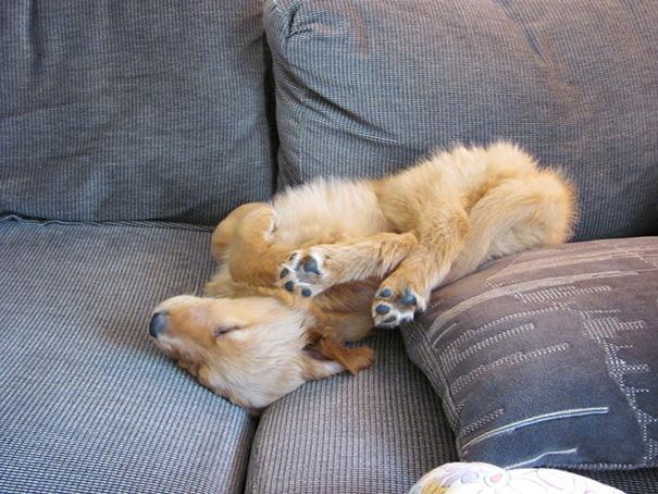 ύπνος κουτάβια
