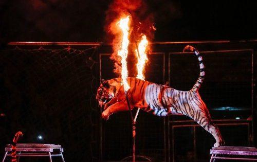 Το Παρίσι θα απαγορεύσει τα άγρια ζώα σε τσίρκο