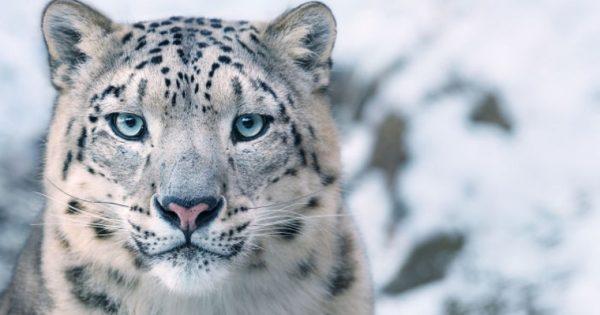 Φωτογραφίζοντας τα πλάσματα που πολύ σύντομα μπορεί να εξαφανιστούν από τη Γη
