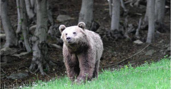 Δύο αρκουδάκια κατέβηκαν στην πόλη της Καστορίας