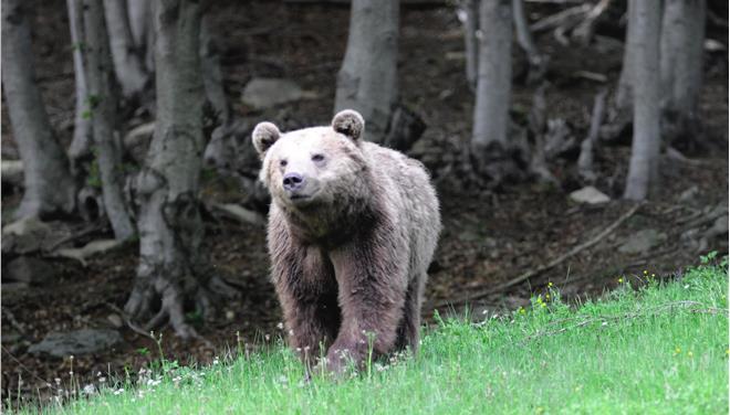 αρκουδάκια αρκούδα καστοριά αρκούδα
