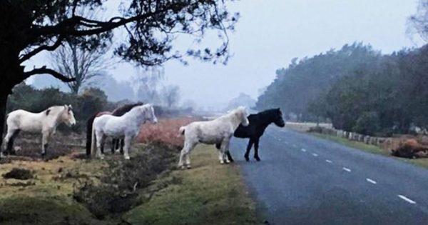 Άλογα φύλαγαν όλη την νύχτα φοράδα που χτυπήθηκε και σκοτώθηκε από αυτοκίνητο