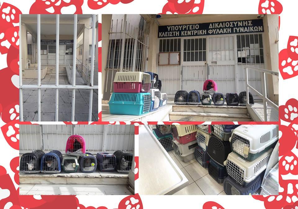 φυλακές κορυδαλλού γάτες