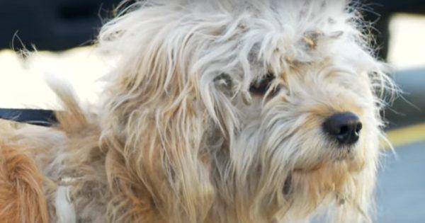 Αδέσποτος σκύλος δέχεται τη φροντίδα που θα σώσει τη ζωή του