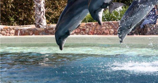 Το Αττικό Πάρκο απαντά για την παράσταση με δελφίνια