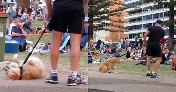 Σκύλος «υποκριτής» πείσμωσε και παρίστανε τον ψόφιο για να μην φύγει από το πάρκο