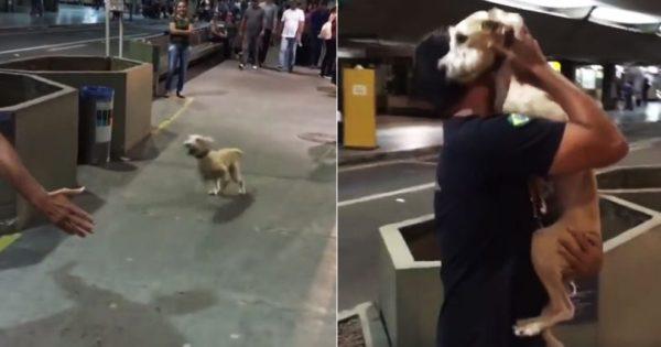 Σκύλος αγκαλιάζει τρέχοντας το αφεντικό του στο αεροδρόμιο