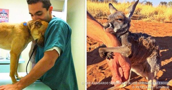 13 ζώα που δεν ξέχασαν να ευχαριστήσουν τους διασώστες τους