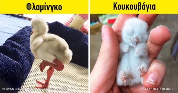 22 μωρά ζώων που δεν μοιάζουν καθόλου με τους γονείς τους