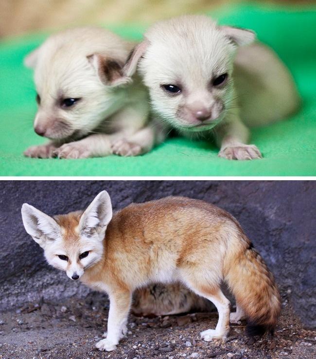 μωρά ζώων ζώα