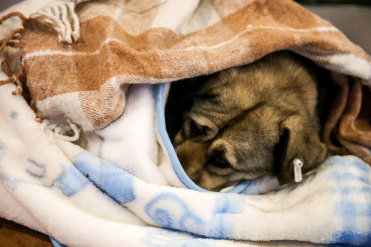 Τουρκία αδέσποτα σκυλιά