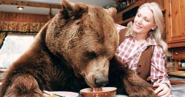 Η παράξενη οικογένεια που μεγάλωσε μια αρκούδα σαν παιδί της