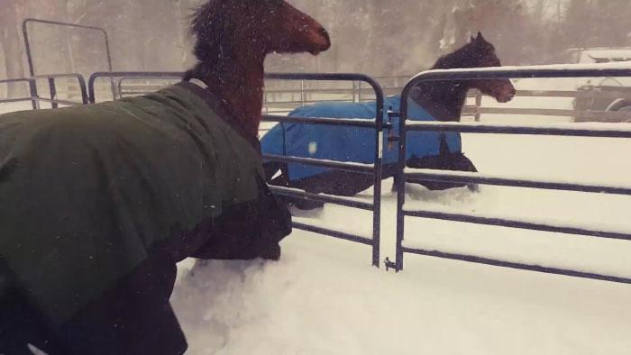 χιόνι άλογα
