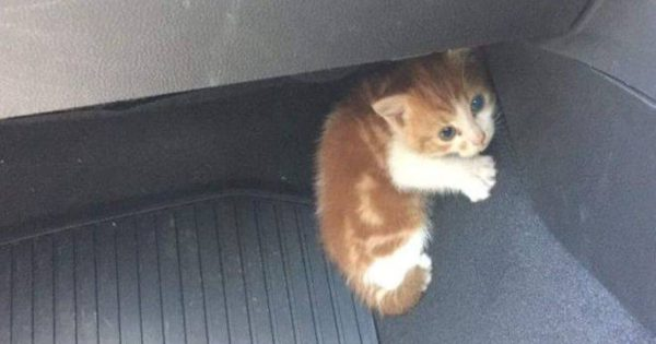 Επιχείρηση διάσωσης μικρού γατιού έκλεισε αυτοκινητόδρομο της Νέας Ζηλανδίας