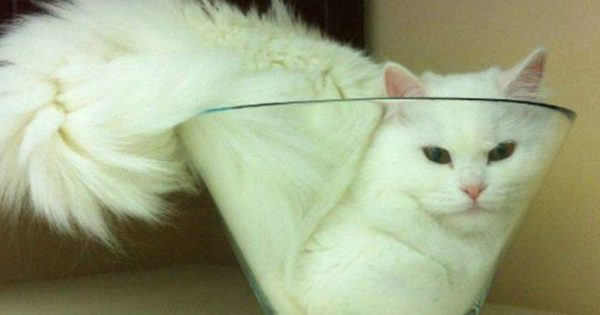 Γατάκια βολεύονται όπου βρουν! (φωτό)