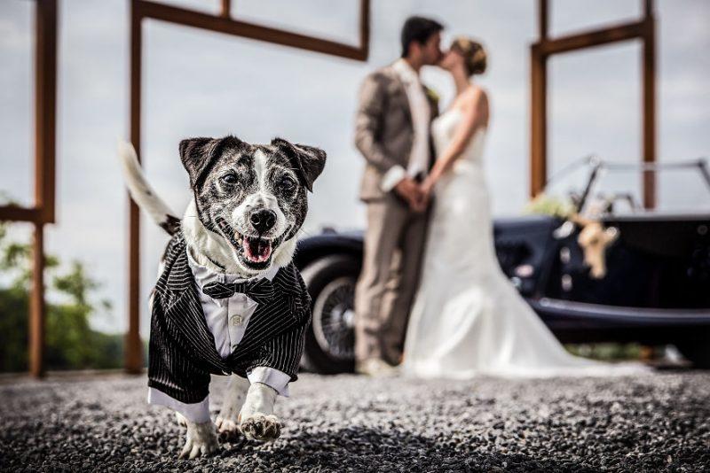 ζώα γάμος