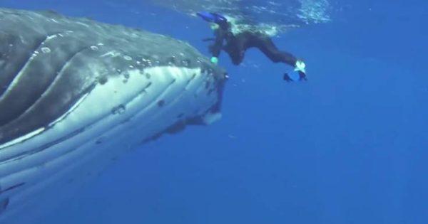Απίστευτο: Φάλαινα προστάτευσε δύτη από τα δόντια καρχαρία