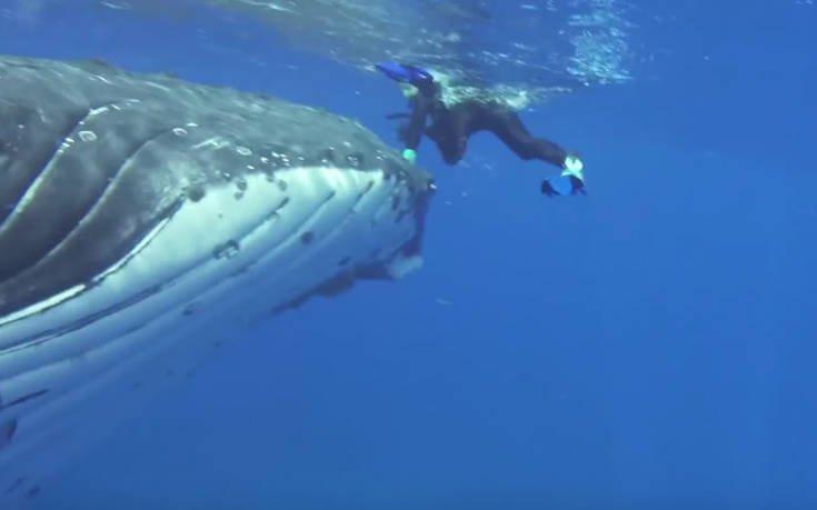 φάλαινα Δύτης