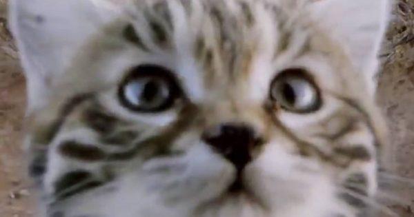 Αυτή είναι η φονικότερη γάτα του κόσμου