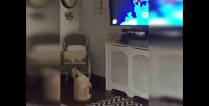 Ένας σκύλος χορεύει μπροστά από την τηλεόραση