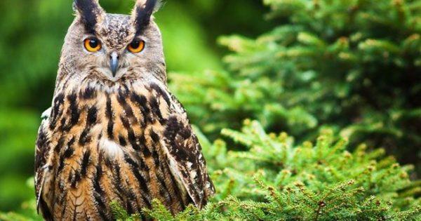 Κουκουβάγιες: Σοφές αλλά και εντυπωσιακές