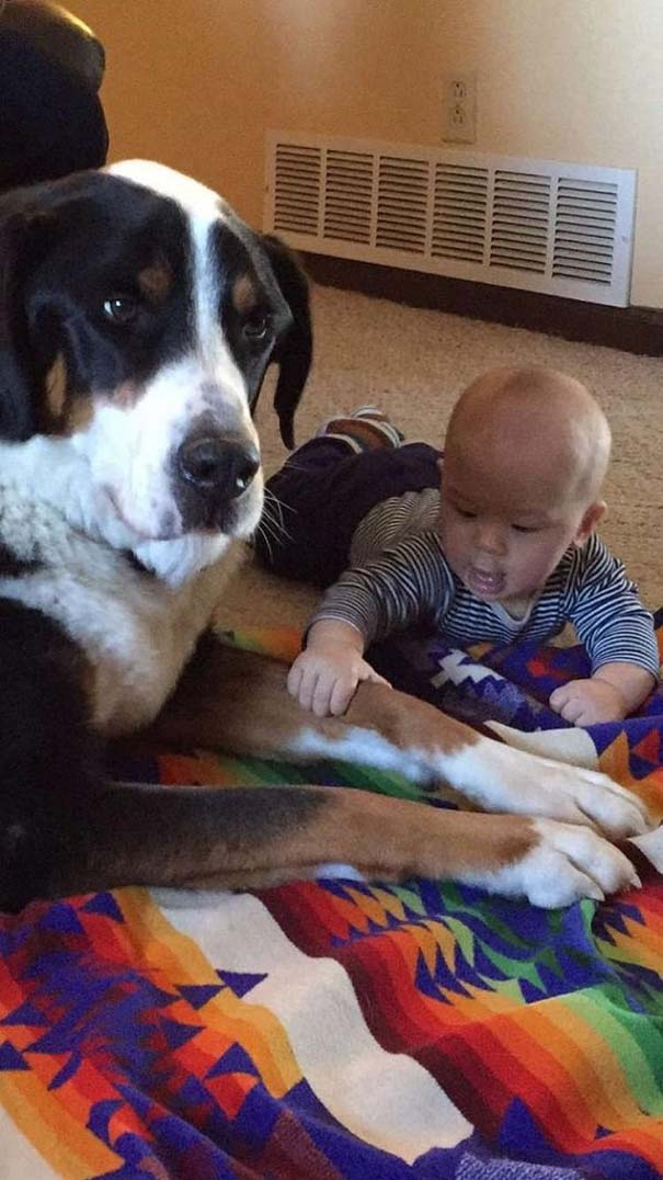 Σκύλος παιδιά και σκύλος παιδιά