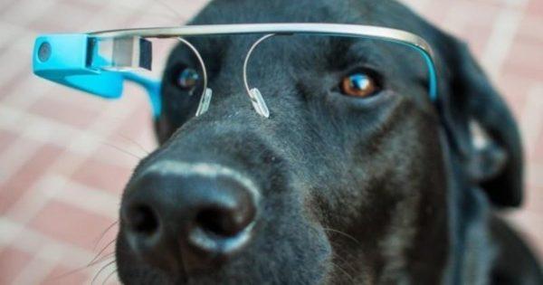 20 Περίεργα πράγματα που μπορείς να αγοράσεις για τον σκύλο σου…Το #5 είναι φανταστική ιδέα!