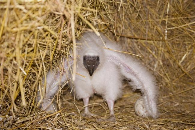μωρά ζώα ζώα άγρια ζώα