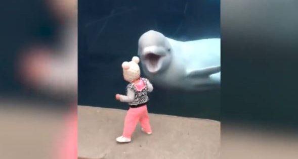 Όταν τα ίδια τα ζώα τρολάρουν παιδιά σε ζωολογικό πάρκο