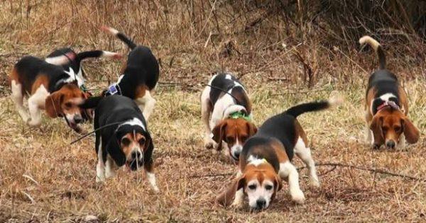 Σύντομα σε δημόσια διαβούλευση νέο σχέδιο νόμου για τα ζώα συντροφιάς