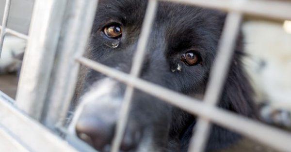 «Πόλεμος» με τις αλλαγές στον νόμο για τα ζώα συντροφιάς